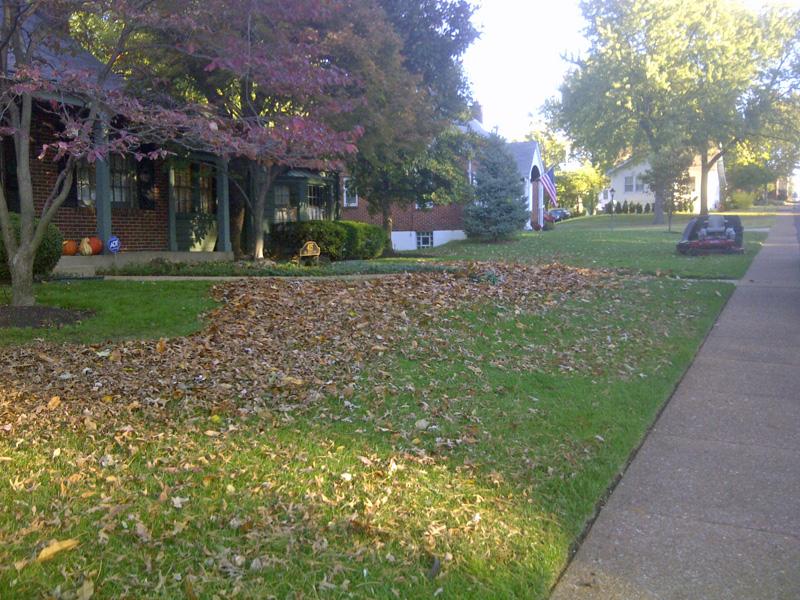 leaf-removal1