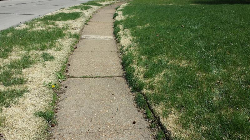 overgrown-lawn-stl