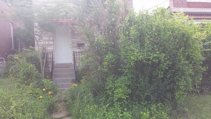 overgrown-yard-st-louis