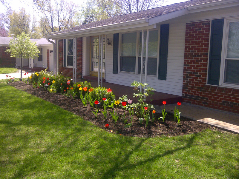tulips-in-flowerbed